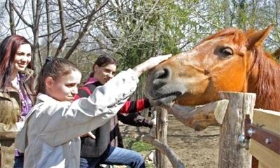 ökotábor ló