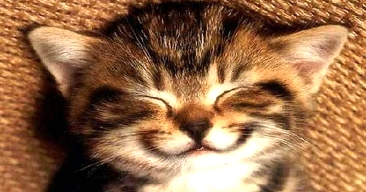cica-smile