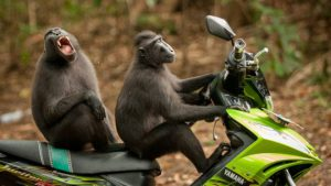 _99225463_katy-laveck-foster_monkey-escape_00000568